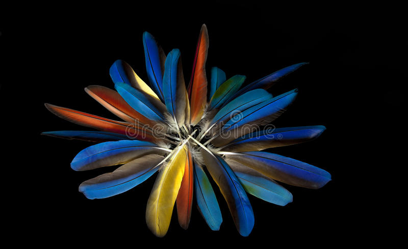 Macaw feathers. (blue and gold macaw stock images