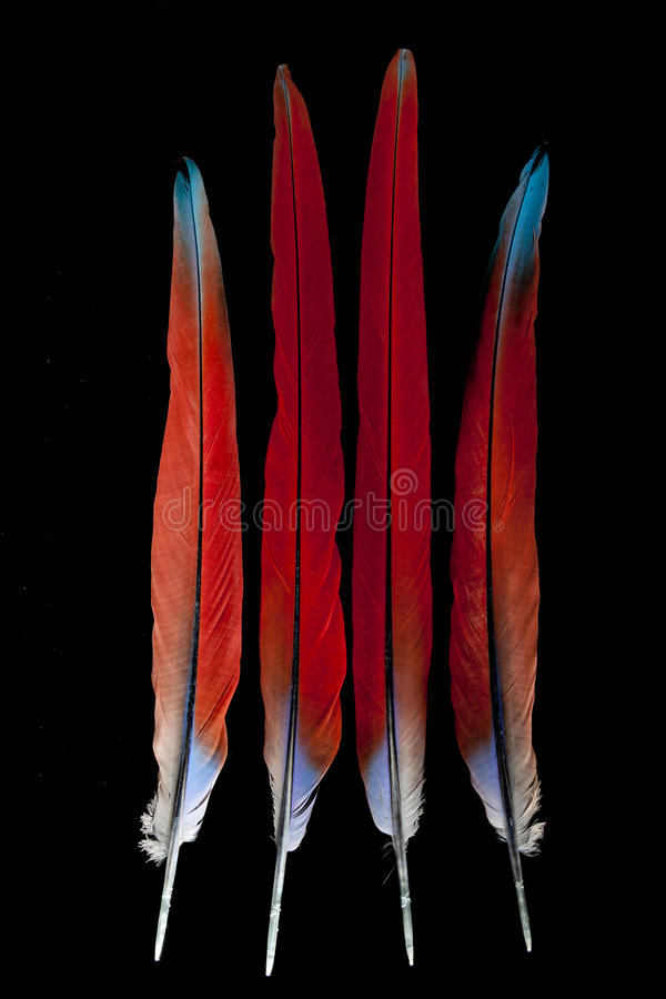 Macaw feathers. Isolated on black background (scarlet macaw stock photography
