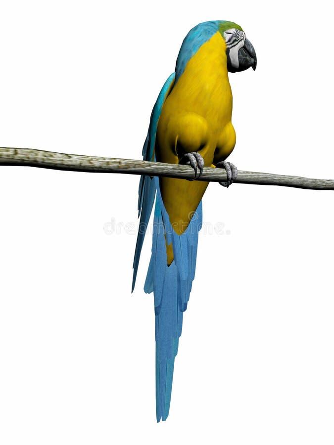 Macaw, loro sobre blanco. libre illustration