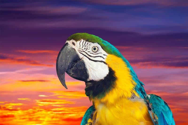 Macaw papagay ενάντια στον ουρανό ηλιοβασιλέματος στοκ φωτογραφία με δικαίωμα ελεύθερης χρήσης