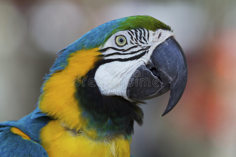Download Macaw Parrot Stock Image - Image: 23478061