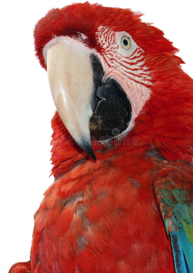Free Macaw Parrot Royalty Free Stock Photos - 5179078