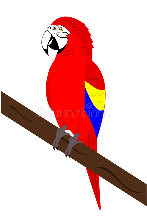 Macaw Parrot vector illustration
