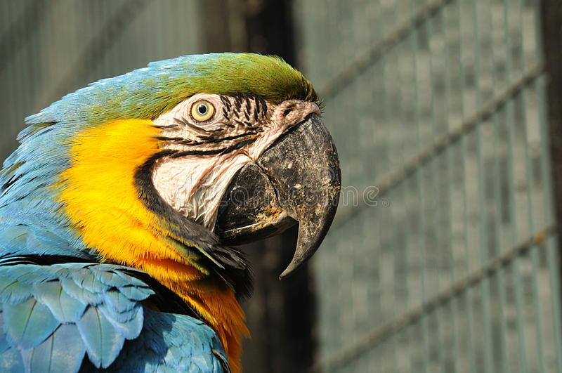 Macaw in china
