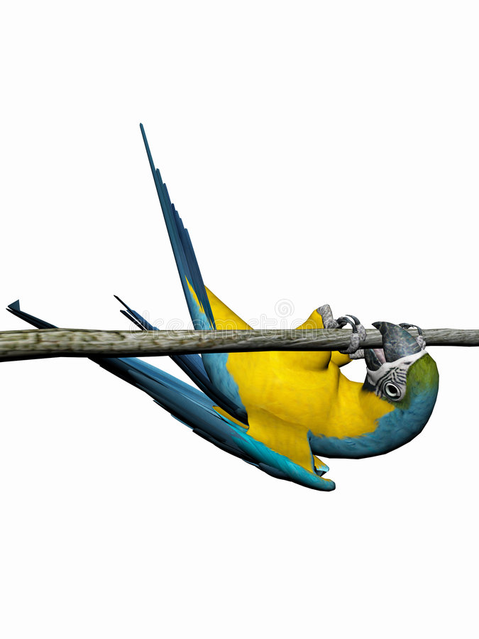 Macaw, parrot over white. stock illustration