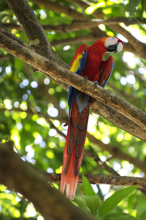 Macaw parrot. Sitting on branch stock photos