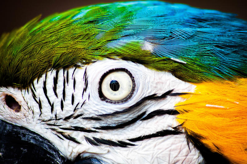 Macaw Parrot royalty free stock images