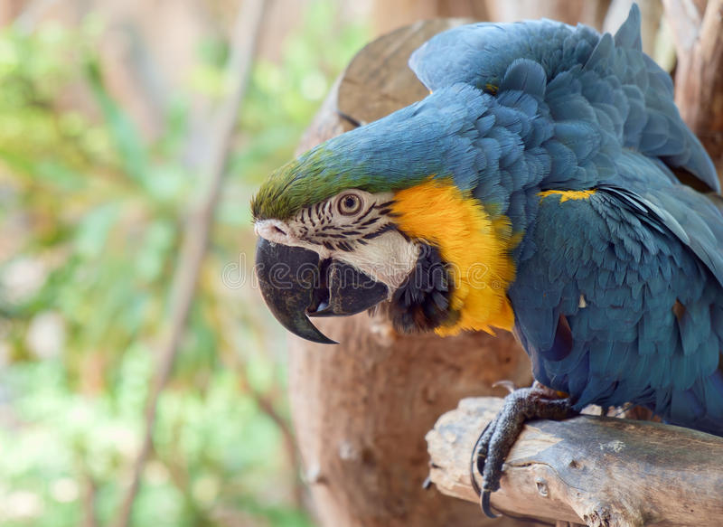 Macaw parrot. View of colorful macaw parrot stock image