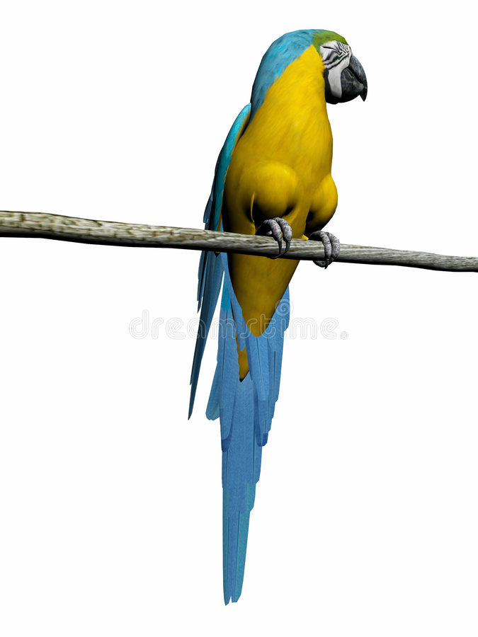 Macaw, perroquet au-dessus de blanc. illustration libre de droits