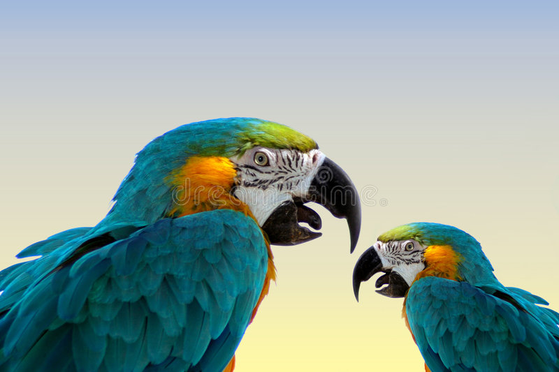 Macaw perroquet-même images libres de droits
