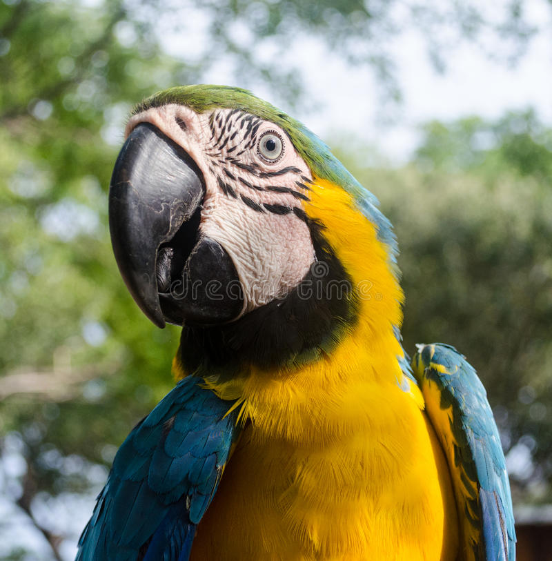 Macaw profile. In the beach royalty free stock photos
