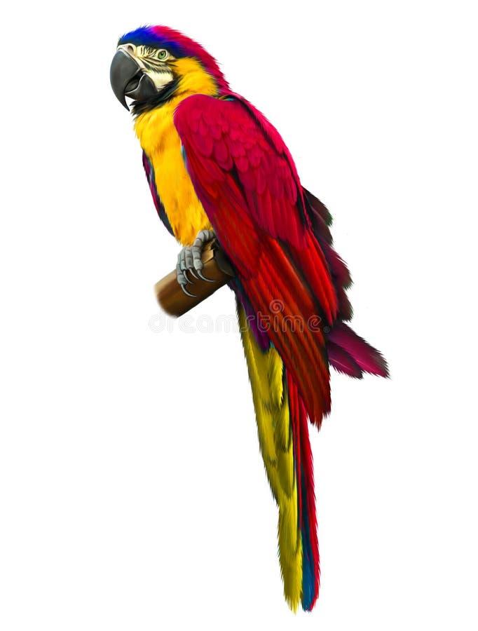Macaw rojo colorido del loro libre illustration