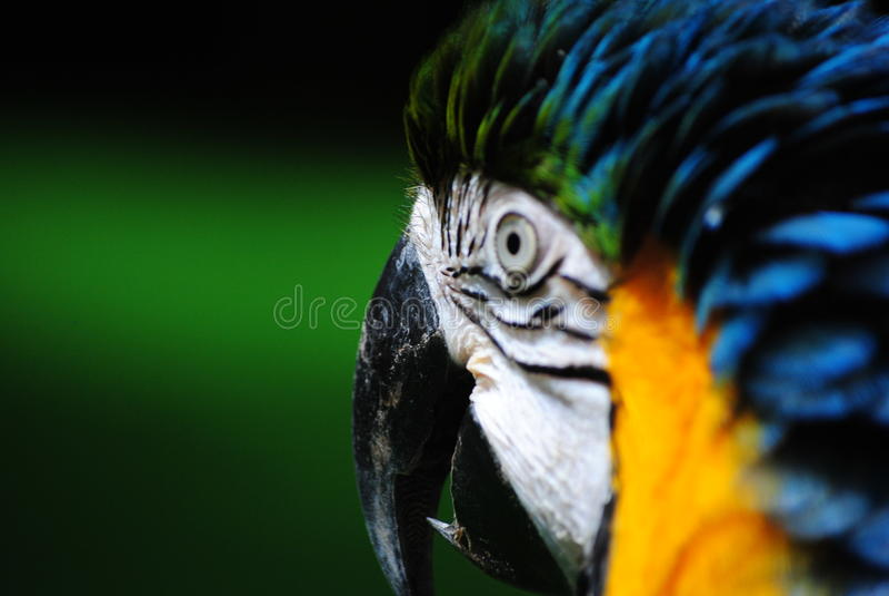 Macaw S Beak Royalty Free Stock Photo