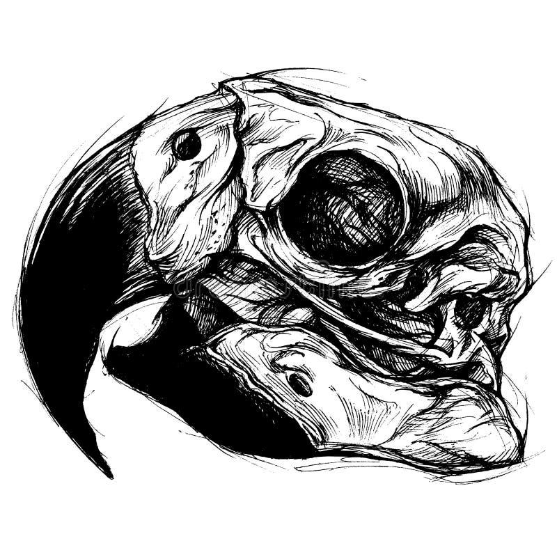 Line Art Skull : Macaw skull drawing line work vector stock