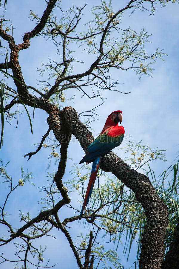 Macaw in a tree stock image
