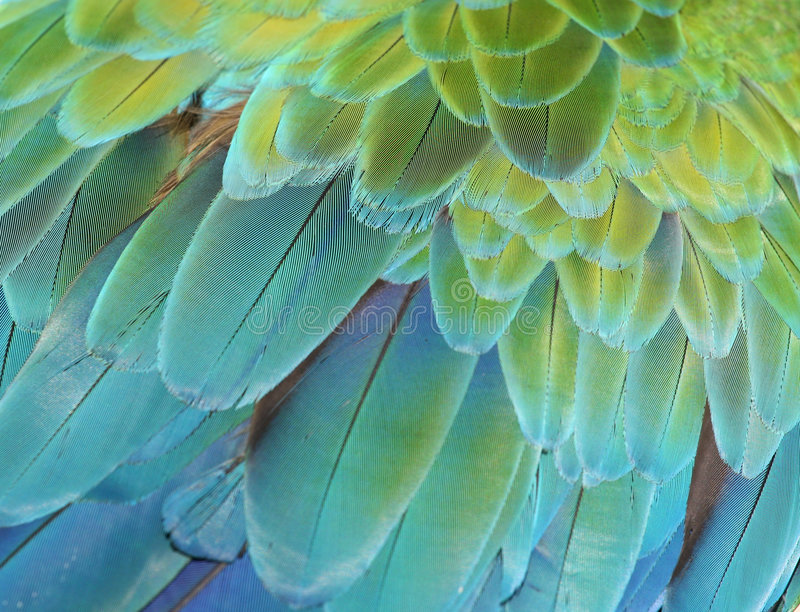 Macawpapagei stockfotografie
