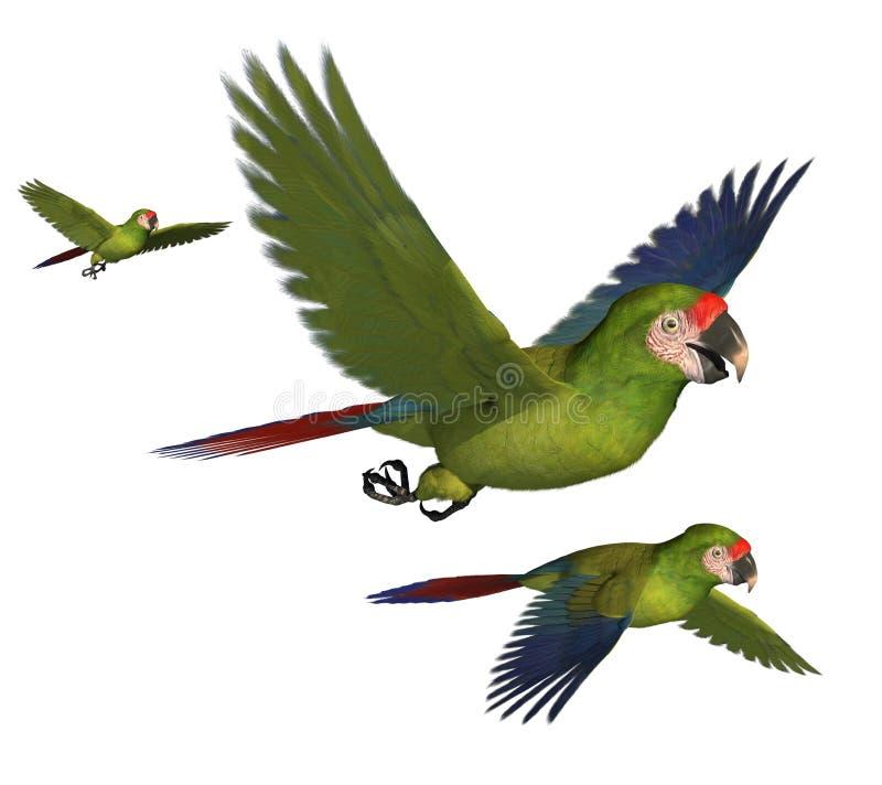 Macaws στρατιωτικός Στοκ Φωτογραφία