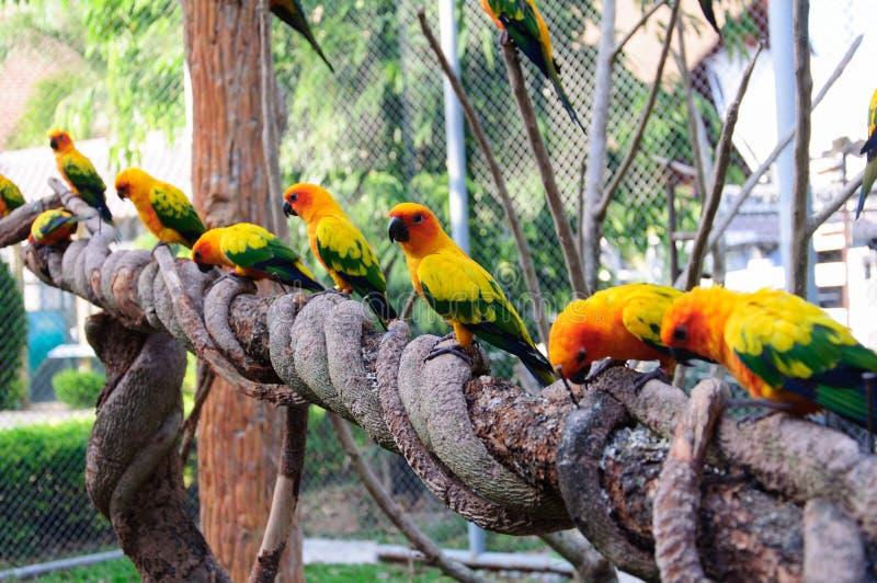 macaws royaltyfri bild