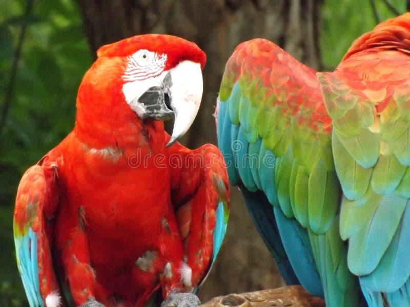 Macaws. Taken at Birmingham Zoo in Alabama stock photo