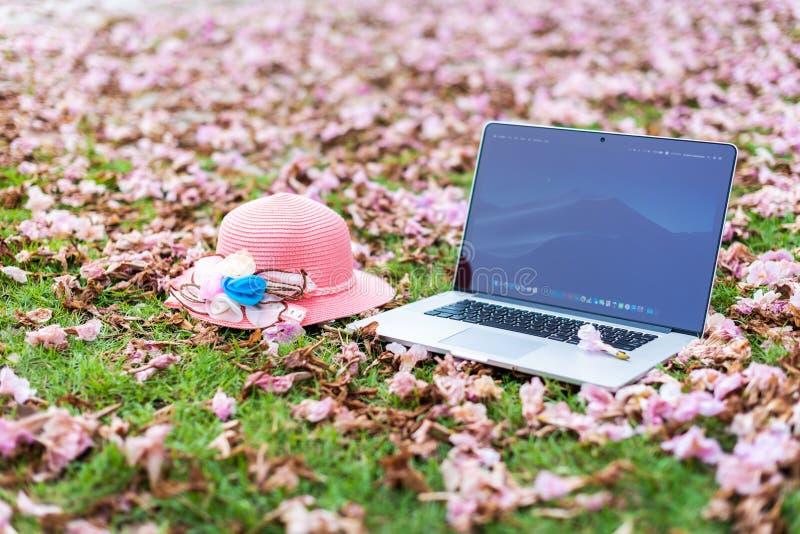 Macbook计算机和桃红色帽子有桃红色花和绿草背景的 免版税库存图片