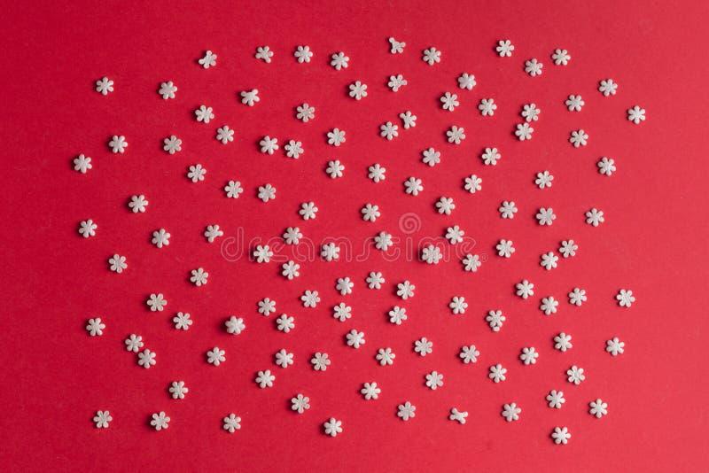 Maccaroni minúsculo isolado no fundo vermelho imagem de stock royalty free