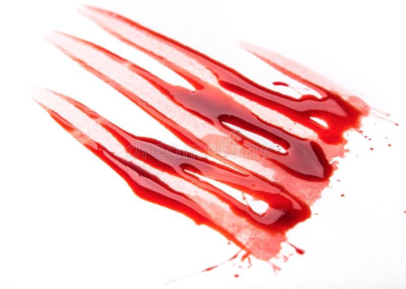 Macchie di sangue schizzate su fondo bianco immagine stock libera da diritti