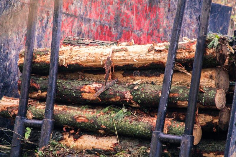 Macchina del caricatore del ceppo abbattuta in una foresta gallega fotografie stock