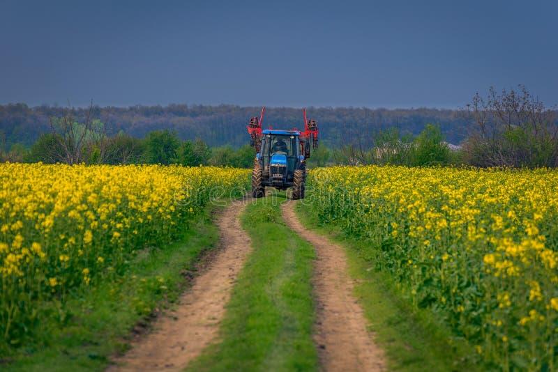 Macchina del trattore utilizzata nell'agricoltura su una strada non asfaltata fra due campi di cozla del canola fotografie stock