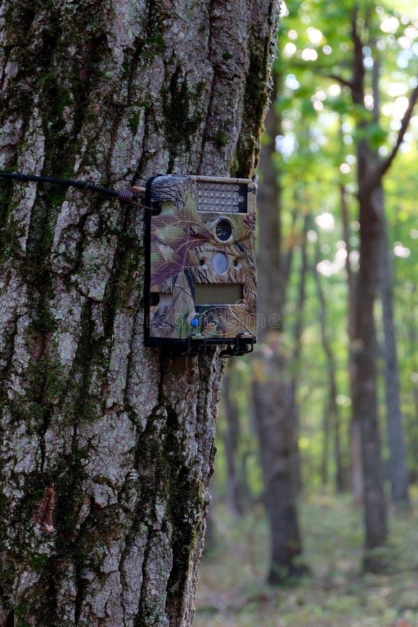 Macchina fotografica del gioco montata sull'albero immagini stock libere da diritti