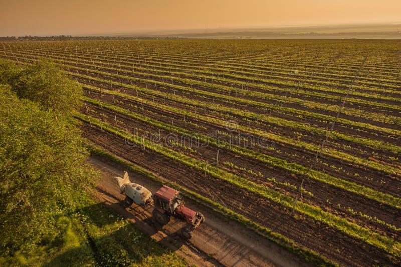 Macchine funzionanti sulla natura del giacimento dell'uva fotografia stock