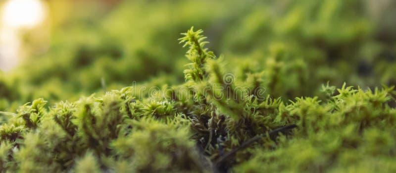Maceta cubierta musgo verde imagen de archivo