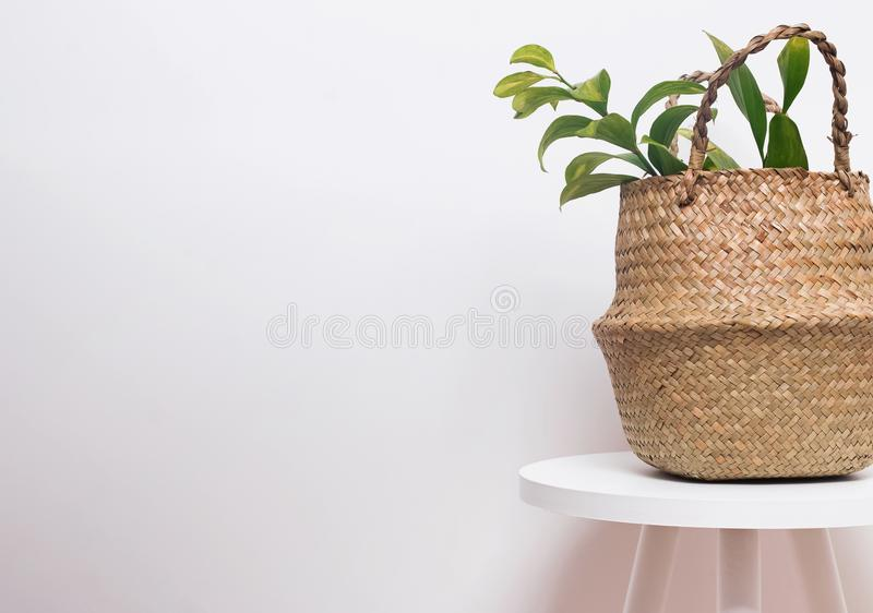 Maceta de la paja con la planta verde en el fondo blanco de la pared imágenes de archivo libres de regalías