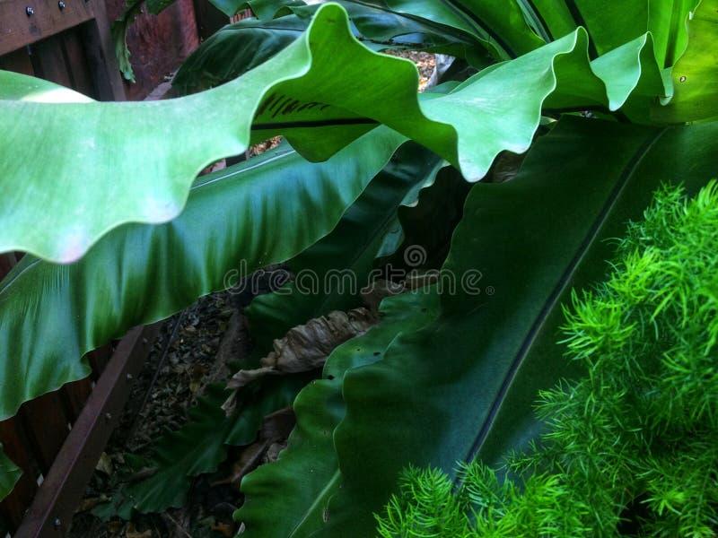 Machać świeżych zielonych liście obraz stock