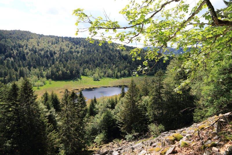 Machais peat bog in the Vosges stock images