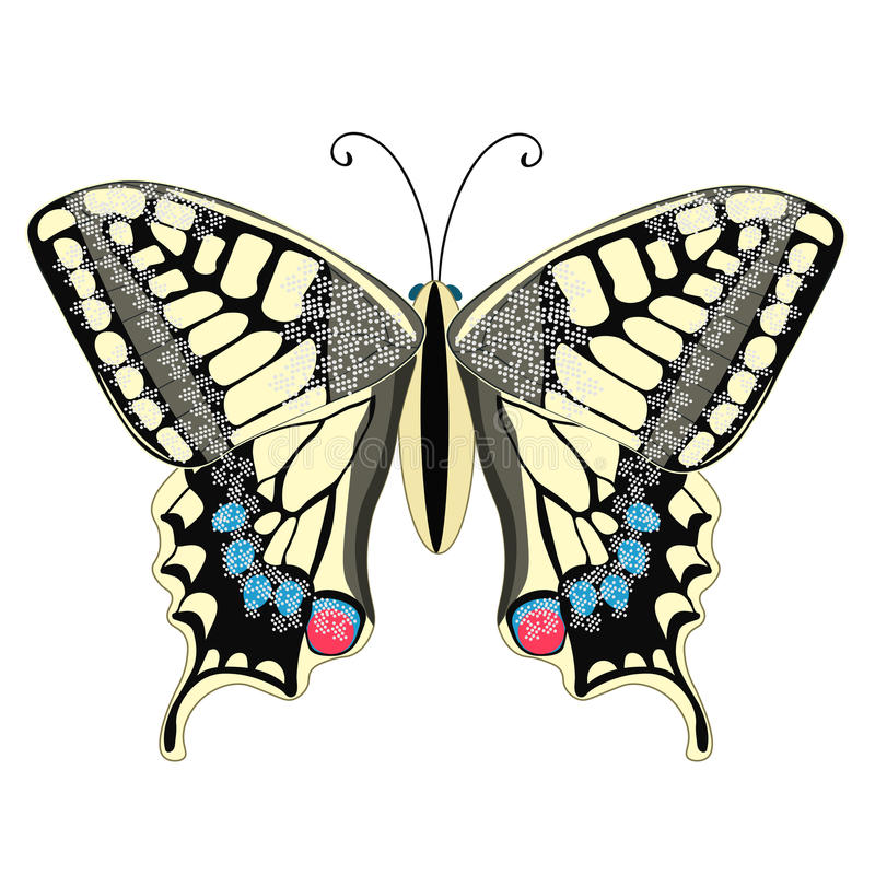 Machaon butterfly close up Europe. vector illustration. Machaon butterfly close up Europe vector illustration royalty free illustration