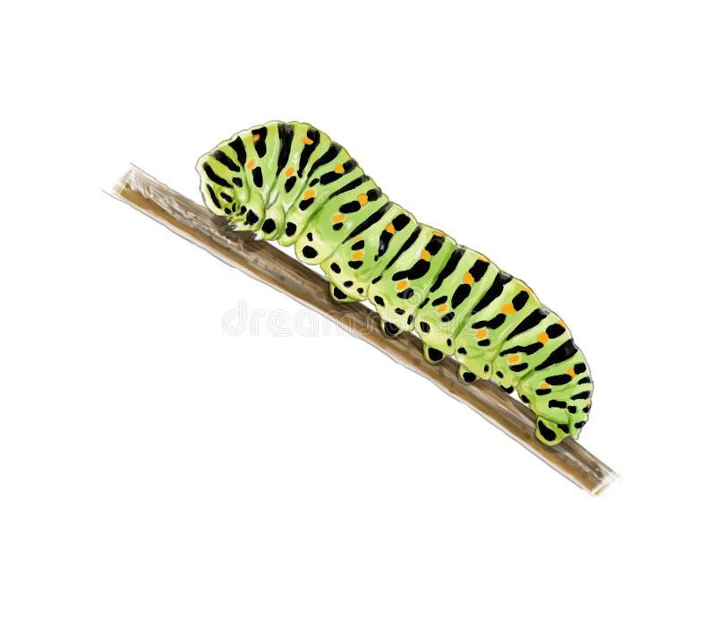 Machaon catterpillar ilustracja wektor
