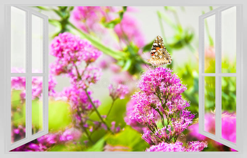 Machaon gently resting on a pink flower view from the window - s. Pring concept image royalty free stock photography