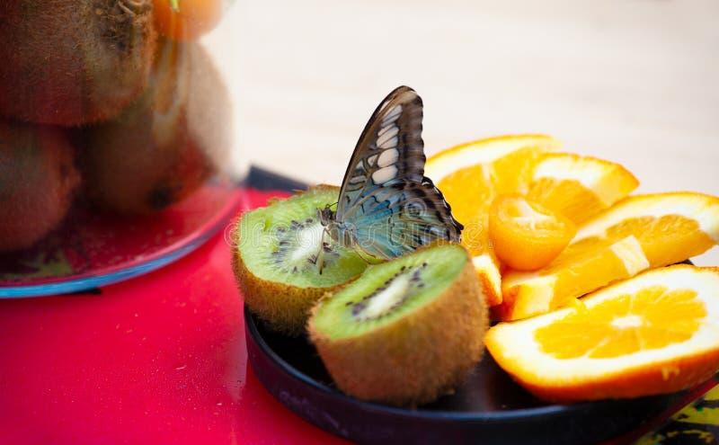 Machaon papilio Motyli machaon na świeżych owoc fotografia royalty free