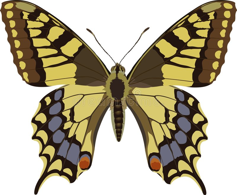 Download Machaonpapilio vektor illustrationer. Illustration av fjäril - 280193