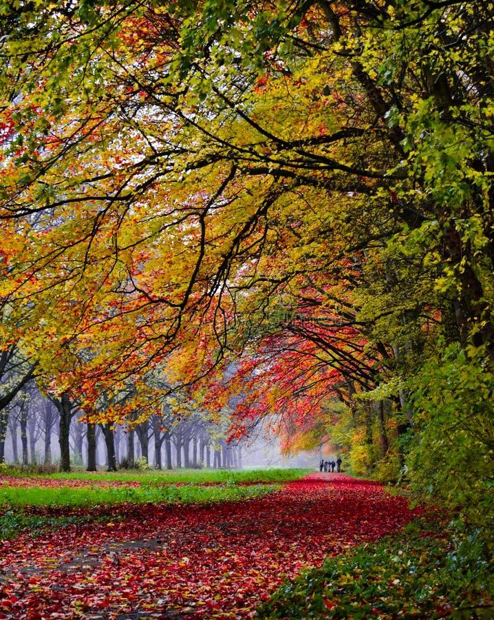 Machen eines Herbstspaziergangs in Amsterdamse-Bos lizenzfreies stockbild