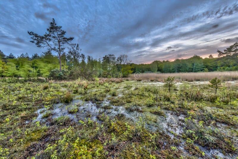 Machen Sie Fenn auf Ontwijk-Zustands-Naturreservat fest stockbild