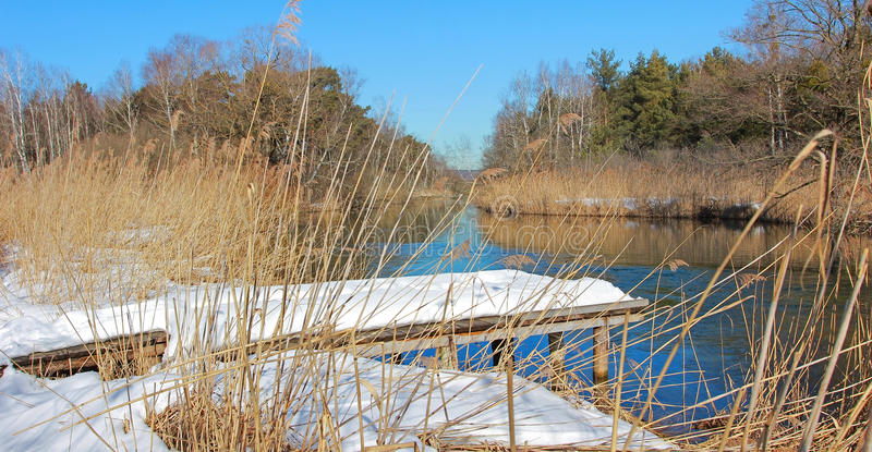 Machen Sie Landschaft mit Birkenpromenade im Winter fest stockbild
