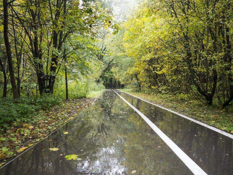 Machen Sie lang gerade Asphaltgasse mit weißer Linie im regnerischen Herbstpark nass stockfoto