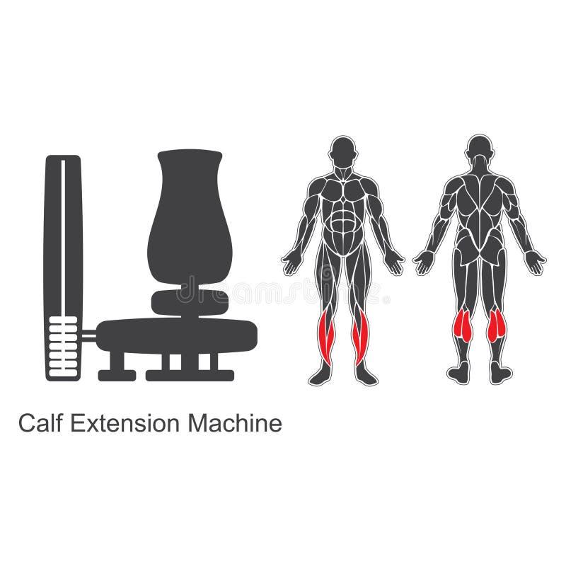 Machine d'extension de veau de gymnase illustration stock