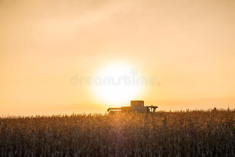 Machine de moissonneuse de cartel fonctionnant dans le domaine de maïs au coucher du soleil multi image libre de droits