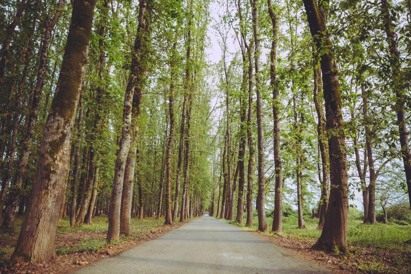 The machine path in the forest . country side space empty car road path way . empty lonely asphalt car road between trees in stock photos