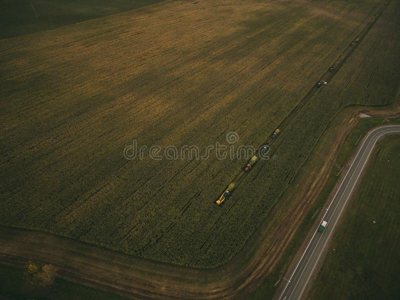 Machines harvesting corn in the field. Aerial drone shot. royalty free stock photography