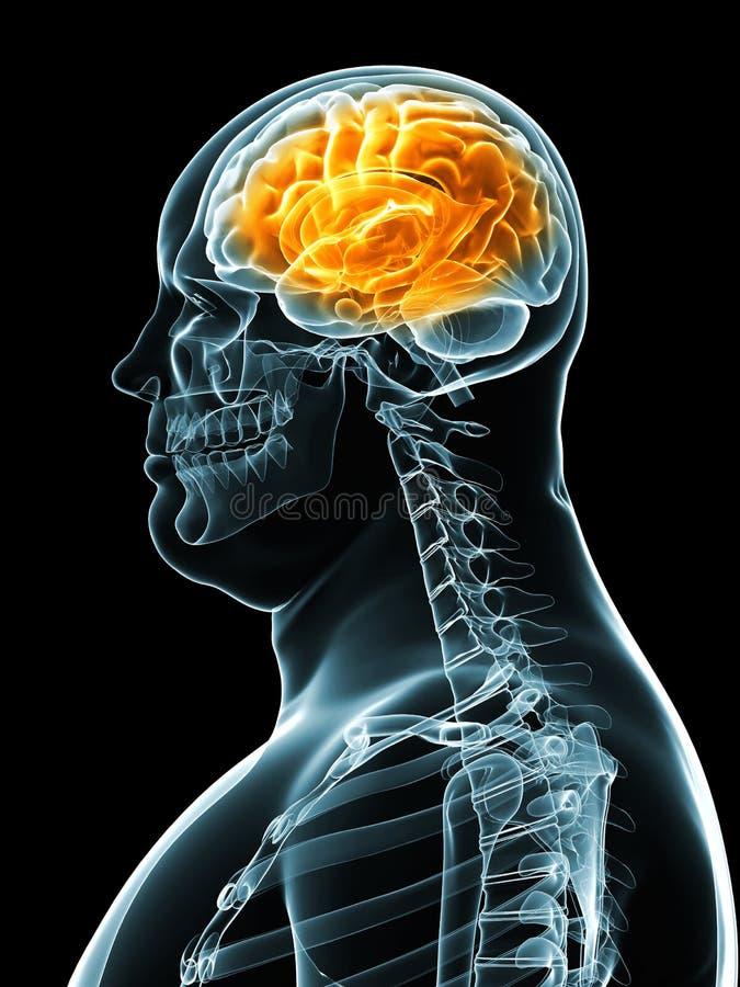 Macho do excesso de peso - cérebro ilustração stock
