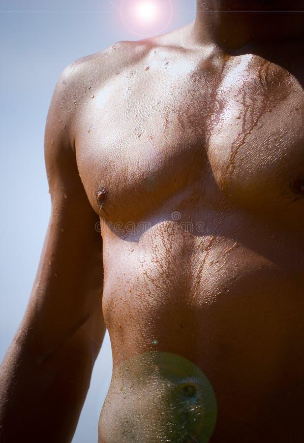 Macho muscular fotos de stock