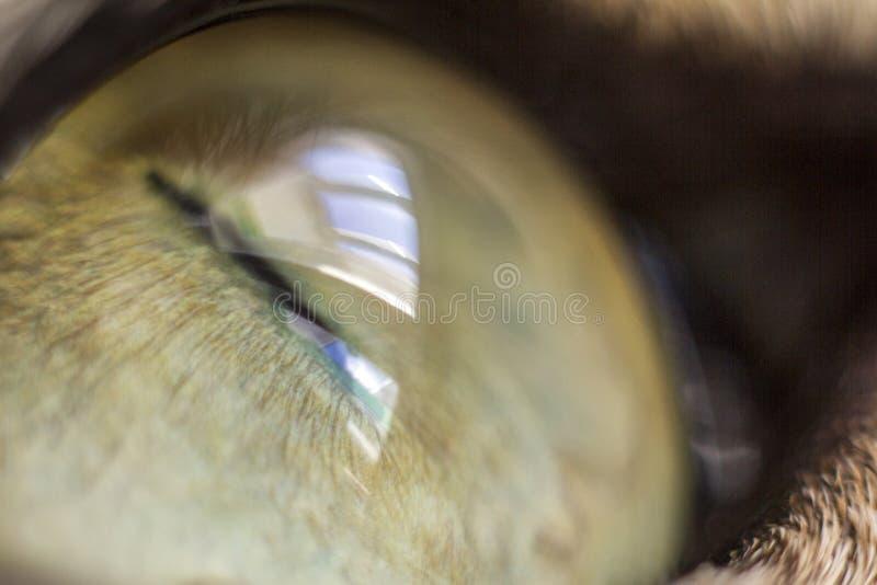 Macht Makrokatze ` s Auge matschig stockbild